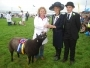 Holsworthy and Stratton Show Cattle and Sheep
